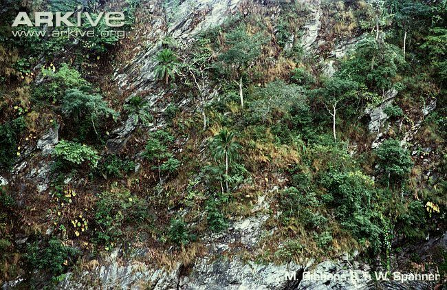 Cliff-date-palms-on-riverbank.jpg
