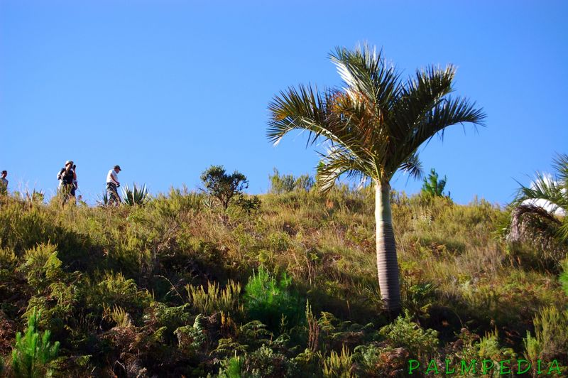 File:MadPalms15.jpg
